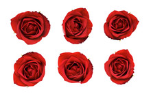 Valentines Red Roses Isolated ...