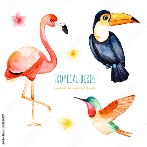 Watercolor Exotic Birds Collectiontexture With Toucan Flamingo