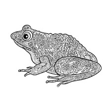 Frog Isolated. Ornamental Dood...