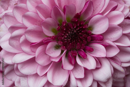 makro-kwiat