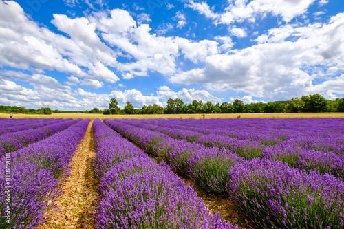 Tuinposter Lavendel Champ de lavande, en été, ciel bleu avec de beaux nuages