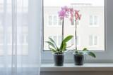 beautiful orchids on windowsill