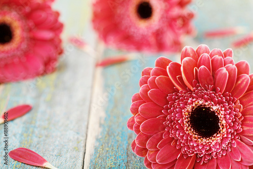 Foto op Aluminium Gerbera Fresh natural gerbera daisy. Mother or womans day greeting concept. Beautiful flower background. Vintage style..