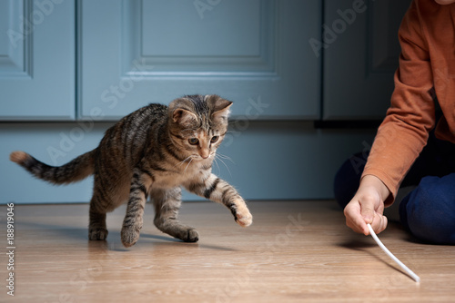 Photo Boy is playing with kitten. Cat is chasing plastic straw.