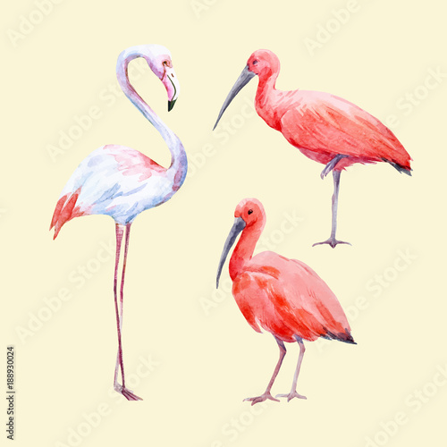 Watercolor ibis and flamingo vector set