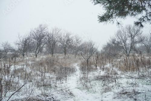 Papiers peints Foret brouillard forest