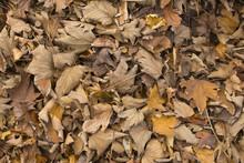 Carpet Of Autumn Leaves.