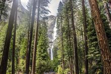 Yosemite Falls Trail Tall Trees