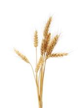 Dry Ears Wheat Grain Isolated ...