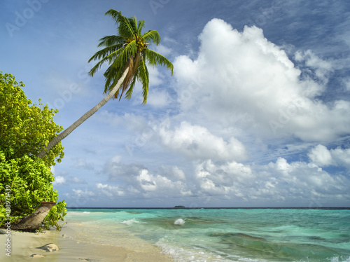 Foto auf Leinwand Ozeanien beautiful inclines palm on the sand beach near the emerald water on Maldives island with area for text