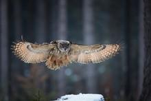 Eagle Owl, Bubo Bubo, Giant Ow...