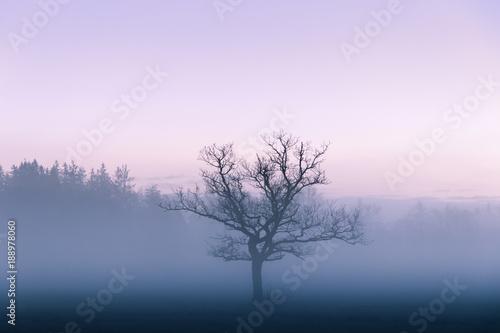 Fototapety, obrazy: Foggy Tree