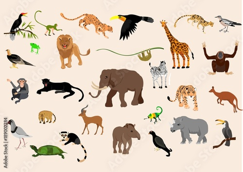 Big set of exotic animals and birds living in savannah, tropical forest,  jungle isolated on white  background Canvas Print