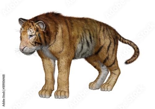 Papiers peints Hyène 3D Rendering Big Cat Tiger on White