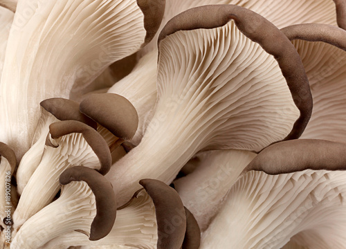 Photo  Oyster mushroom background
