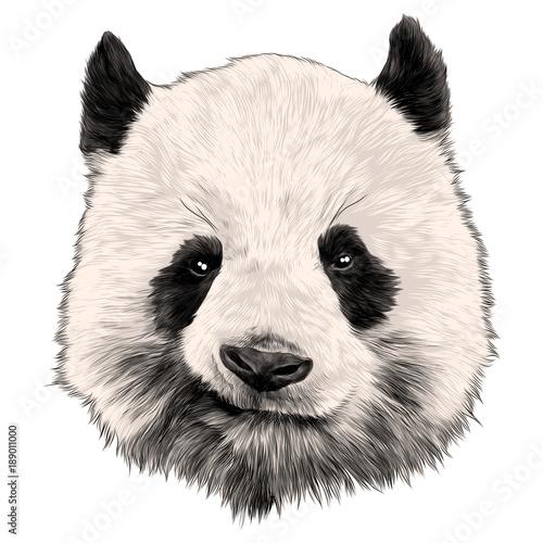 Photo  head Panda grins sketch vector graphics color picture