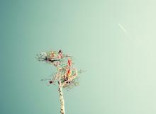 Looking Up At May Pole And Air...