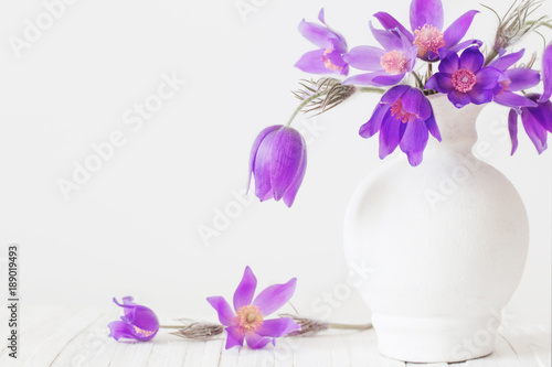 Foto op Canvas Lilac pasque-flower in vase on white background