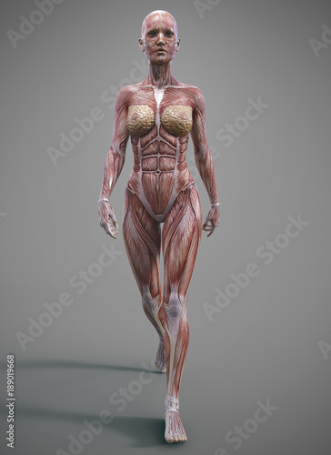 Fotografía  female muscle skeleteon and anatomy