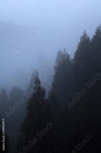 Fototapety, obrazy: 京都鷹峯山麓