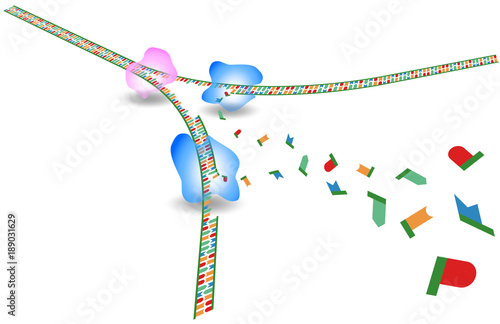 DNA replication Wallpaper Mural