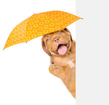 Happy And Funny Puppy With Umbrella Above White Banner. Isolated On White Background