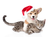 Pembroke Welsh Corgi Puppy In Red Santa Hat Hugging Cat. Isolated On White Background