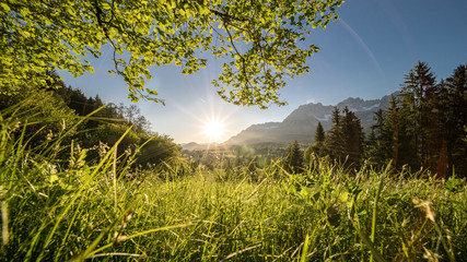die Sonne beim Untergehen zwischen dem Baum und der Wiese