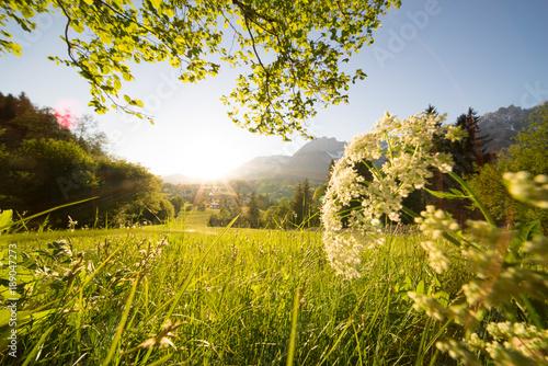 Schöne Blumenwiese In Den Letzten Sonnenstrahlen Buy This Stock