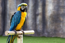 Beautiful Parrot Macaw Sits On...