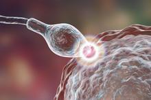 Fertilization Of Human Egg Cel...