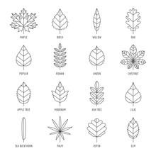 Leaves Types With Names Outline Vector Icon Set.