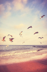 Fototapeta Vintage Birds flying above a beach at sunset, color toned picture.