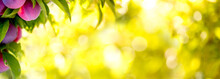 Fruit Plums Garden Bokeh Backg...