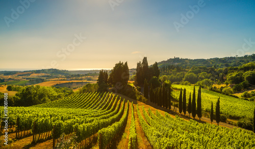 Canvas Prints Vineyard Casale Marittimo village, vineyards and landscape in Maremma. Tuscany, Italy.
