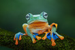 Close up of tree frog sitting on branch