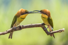 Close Up Of Birds Sitting On B...