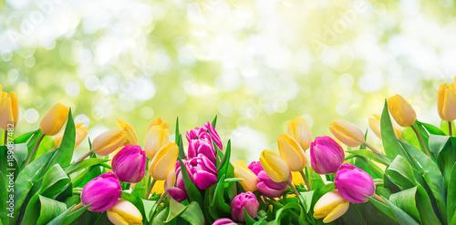 Deurstickers Tulp Frühling Karte Banner frisch Tulpen