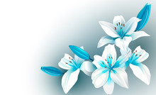 White And Blue Blooming Flowers