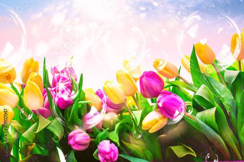 Foto op Plexiglas Tulp Karte mit Tulpen Pastell Hintergrund