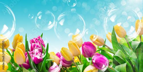 Foto op Plexiglas Tulp Feld Tulpen mit Seifenblasen und Himmel