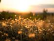 Leinwandbild Motiv Nature grass flower in sunset, Shallow depth of field.