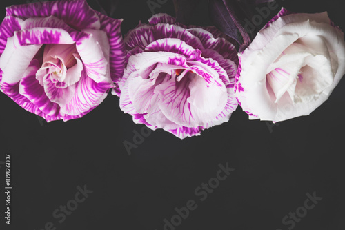 Purple flowers on dark background flower frame with copy space purple flowers on dark background flower frame with copy space mothers day valentines mightylinksfo