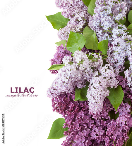 Fotobehang Lilac Lilac flowers isolated on white background
