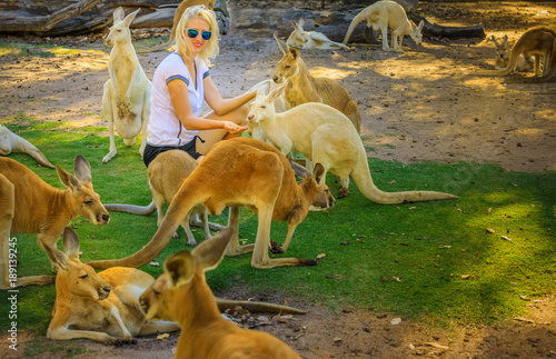 Young caucasian woman feeds Kangaroos at a park. Whiteman, near Perth, Western Australia. Female tourist enjoys Australian animals icon of the country.