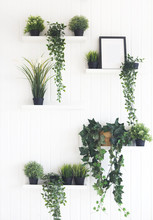 Green Plants On Shelves On White Wall In The Room