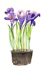 Bright Watercolor Iris Flowers...