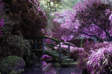 Mystical Magical Forest