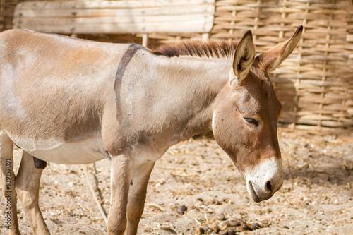 In de dag Ezel âne