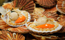 Fresh Scallops For Sale At Red...